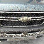 insectos-en-el-coche